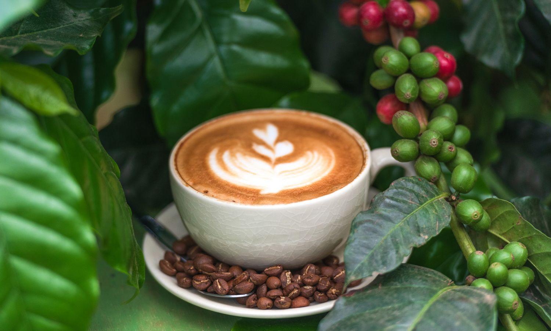 Фрески «Кофе 11»