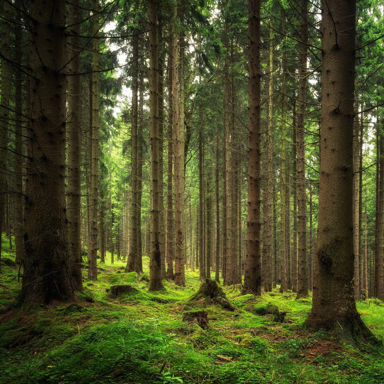 Фотообои «Красивый лес»