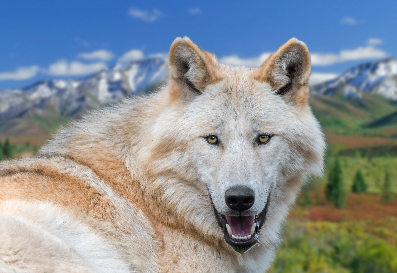Фрески «Волки 28»