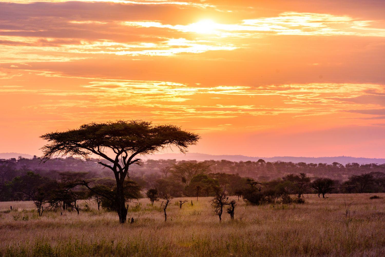 Фрески «Африка 21»