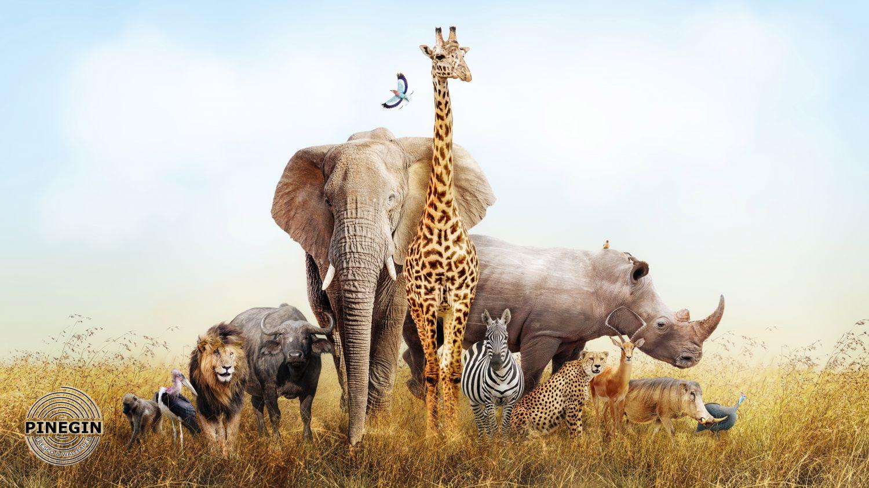 Фотообои «Животные в саванне»
