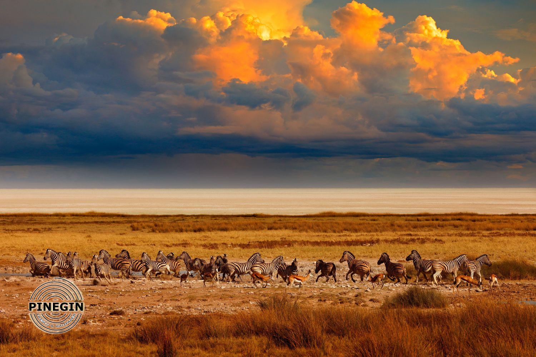 Фотообои «Зебры в саванне»
