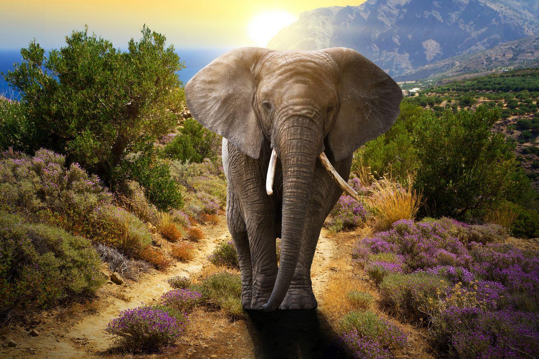 Фотообои «Большой слон»