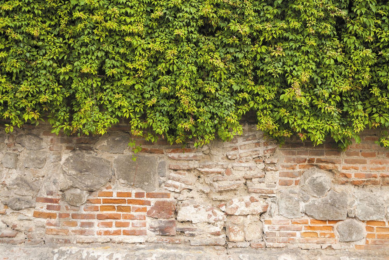 Фотообои «Старая стена»
