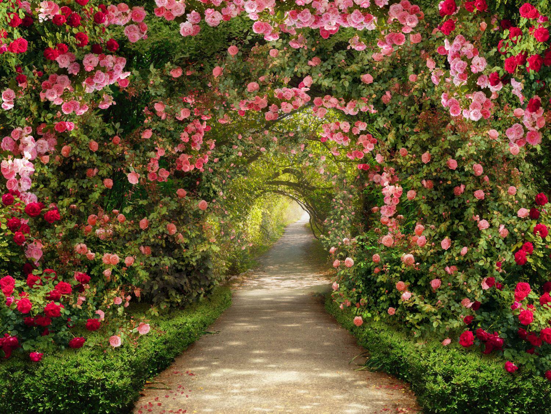 Фотообои «Арка из роз»