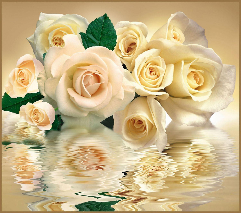Фотообои «Чайные розы в отражении»