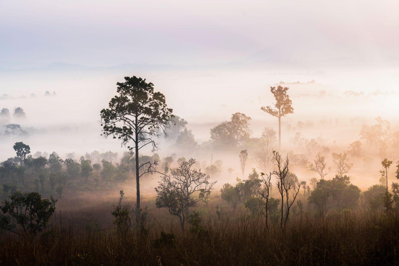 Фотообои «Осеннее утро в туманном лесу»
