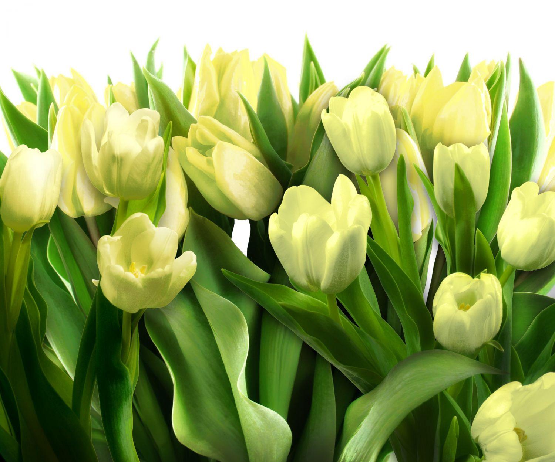 Фотообои «Желтые тюльпаны»