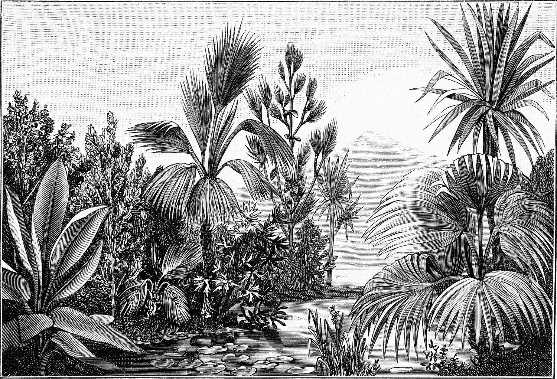Фрески «Джунгли в черно-белом цвете»