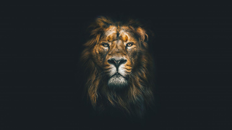 Фотообои «Лев черный фон»
