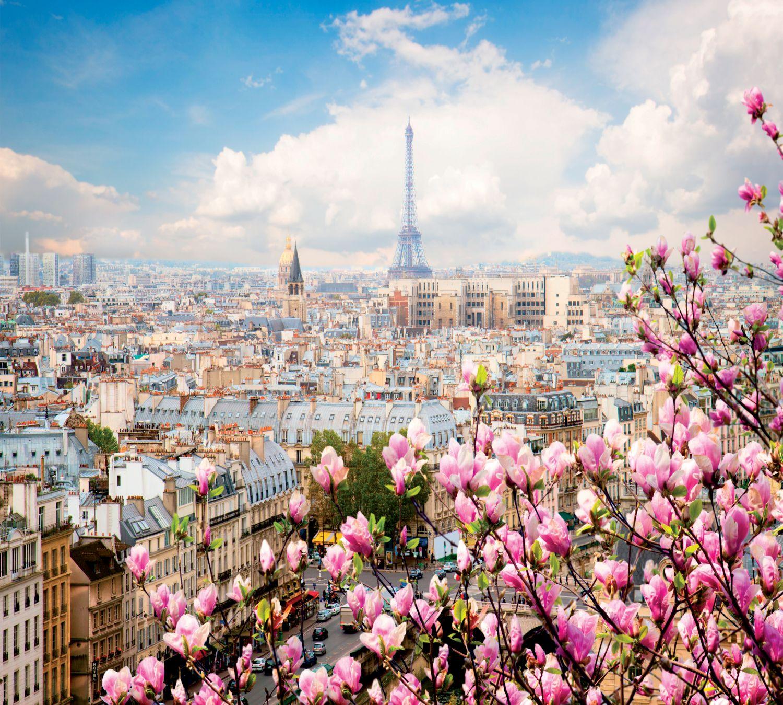 Фотообои «Магнолии в Париже»