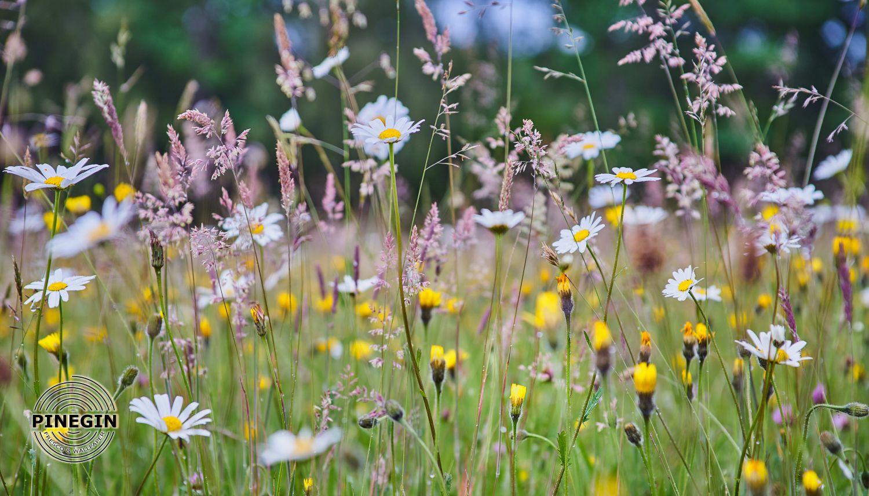 Фотообои «Цветы полевые»