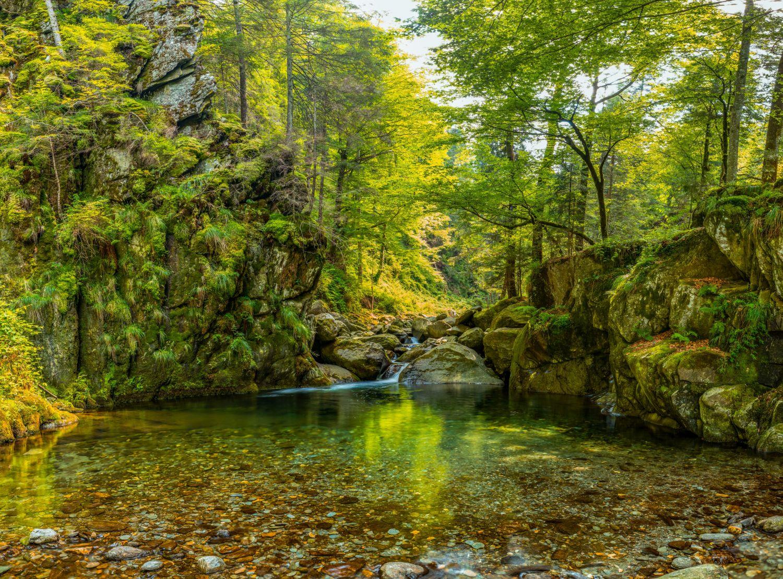 Фотообои «Озеро в лесу»
