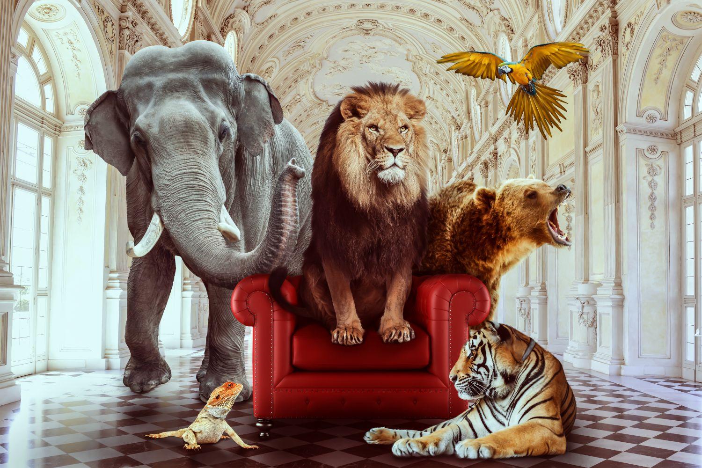 Фотообои «Большие животные»