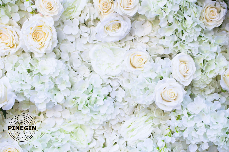 Фотообои «Стена из белых роз»